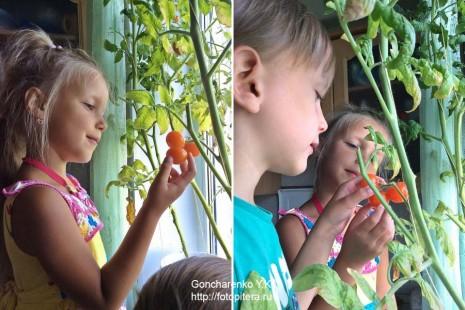 tomats_4