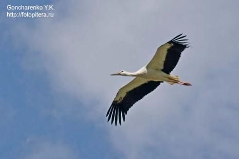 storks_4